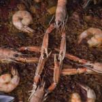 Omar Allibhoy seafood paella with shellfish stock recipe on Sunday Brunch