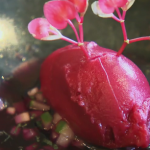 Beetroot Ice Cream on Terry and Mason's Great Food Trip