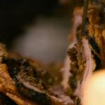 Jamie Oliver epic porchetta pork loin with Italian stuffing recipe